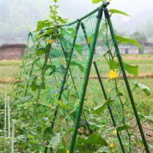 Садовые зеленые нейлоновые шпалеры поддержка для плетения альпинистских бобовых растений сети для выращивания Fen CeIdeal Vining овощи/фрукты/Цветы Горячая Распродажа